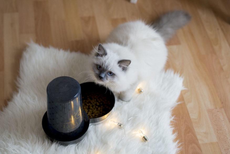 Miska Magic Cat Luxurious na krmení 1,5L