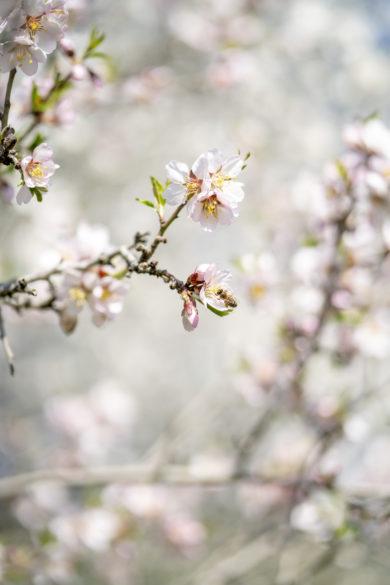 jaro petřín
